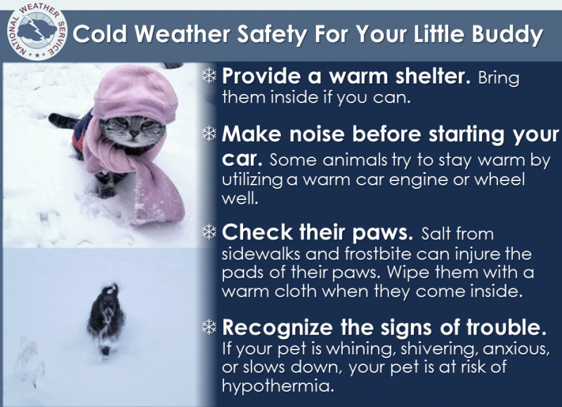 COLD WEATHER SAFETY FOR YOUR PETS