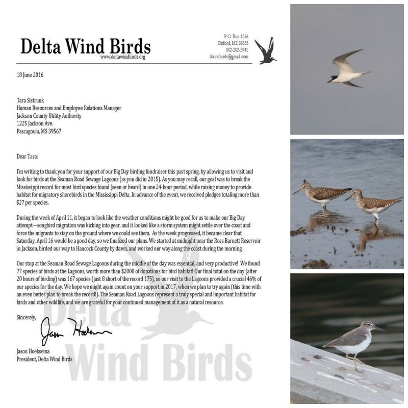 Delta Wind Birds Big Day Ltr-Pic Collage